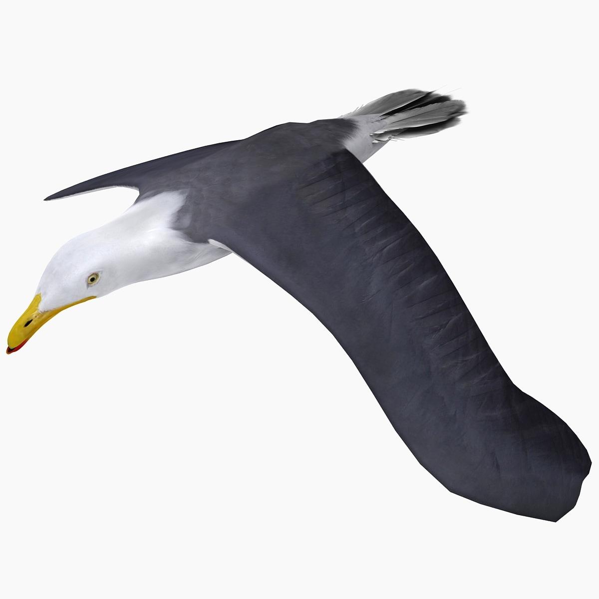 3d model flying gull 1 rigged