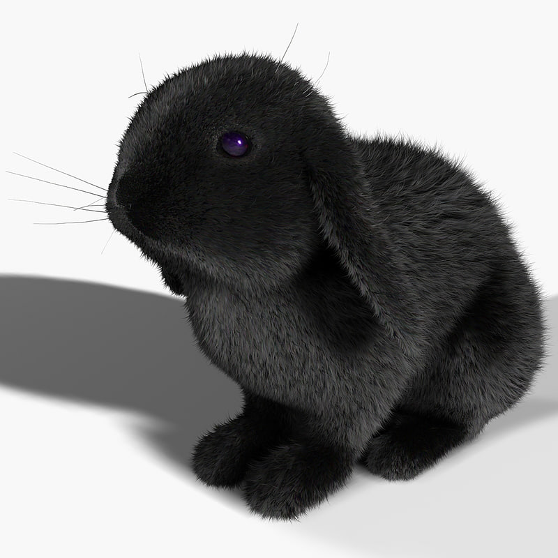 rabbit black fur max
