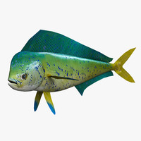 3d model dolphinfish mahi fish