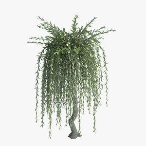 salix purple willow obj