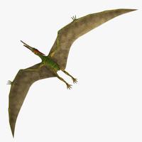 3d pteranodon wild prehistoric model