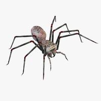 free spider 3d model