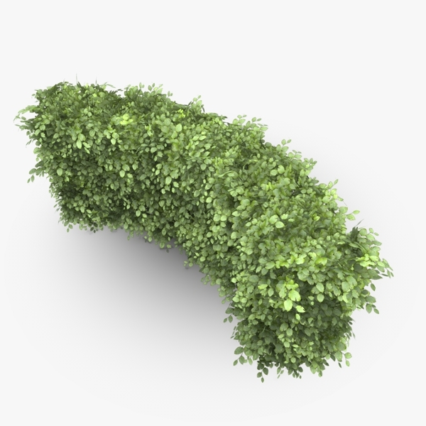 3d model curved common beech hedge