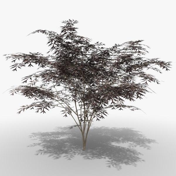 elderberry black beauty 3d 3ds