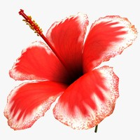 Hibiscus Flower V2