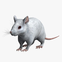 white mouse max