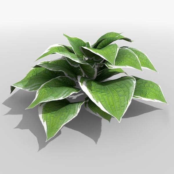 plantain lily plant 3d 3ds