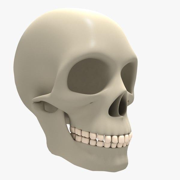 3d model cranium skull