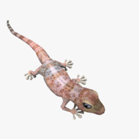 Gecko (Animated)