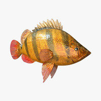 3dsmax tiger fish