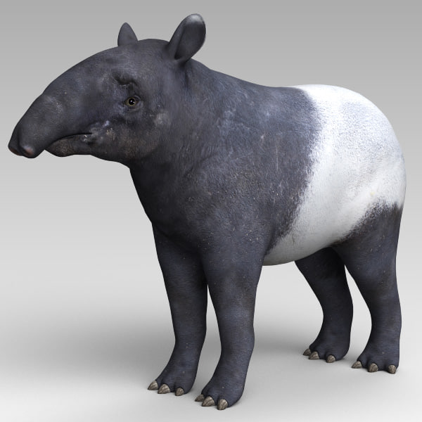 tapir boar mammal 3d model