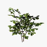 hazel bush 3d 3ds