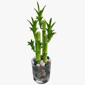 3d lucky bamboo 4 model