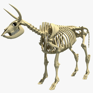 cow skeleton 3d max