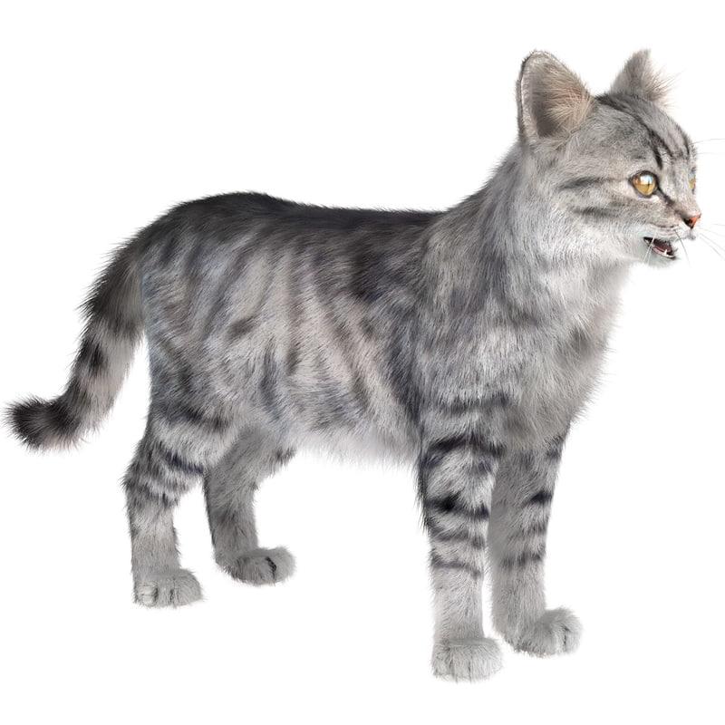cat 3 fur
