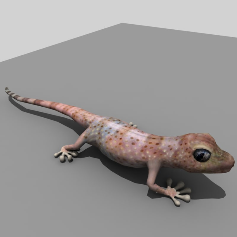 realistic gecko rigged max