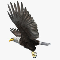 3d rigged lightwave eagle