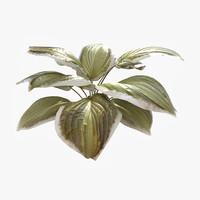 hosta plant dry 3d max