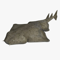3d angel shark