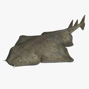 3d angel shark