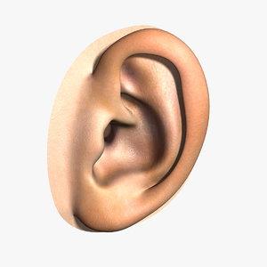 max human ear