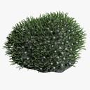 Green Xenia Coral 3D models