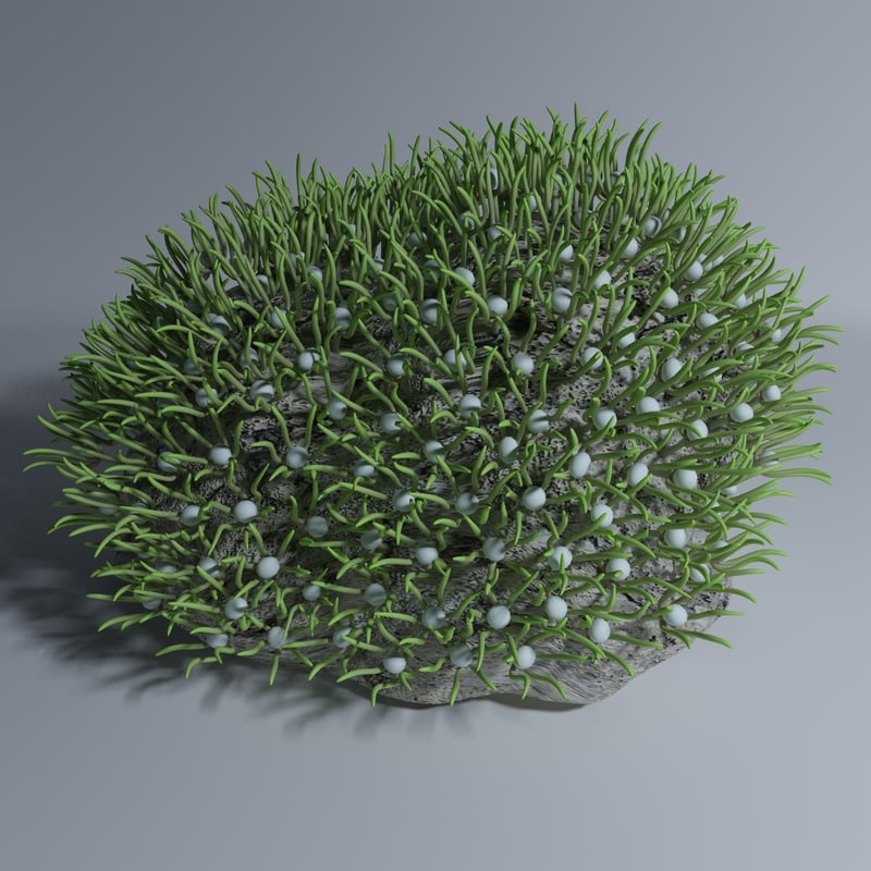 3d green xenia coral model
