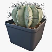 3d model matucana cactus plant 2