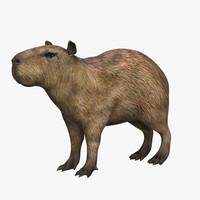 3d capibara