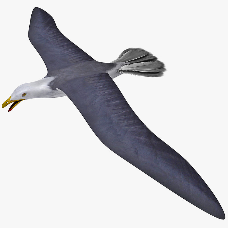 gull flying rigged 3d max