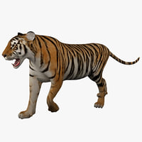 3d tiger 2 rigged animal model