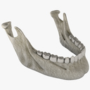 jaw 3D models