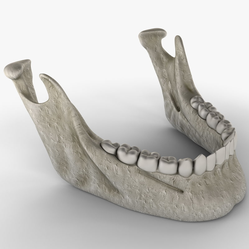mandible bone 3d model