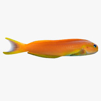 midas blenny 3d model