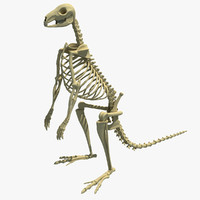 3ds max kangaroo skeleton