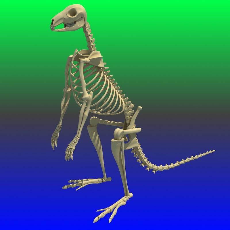 3ds max kangaroo skeleton