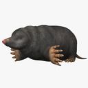 Mole 3D models