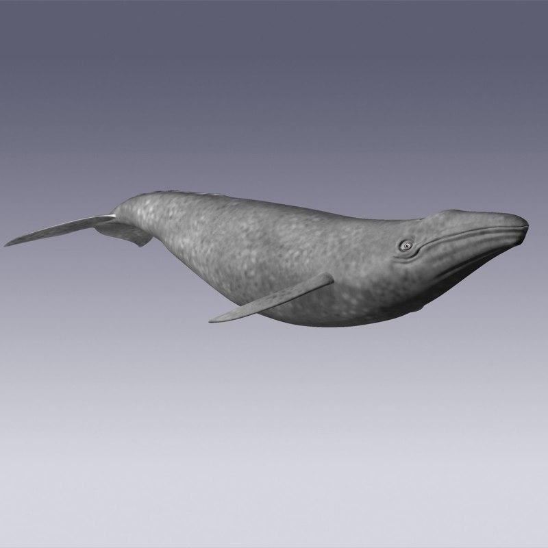 3d model gray animation