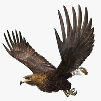 golden eagle 3d ma