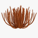 Finger Coral 3D models