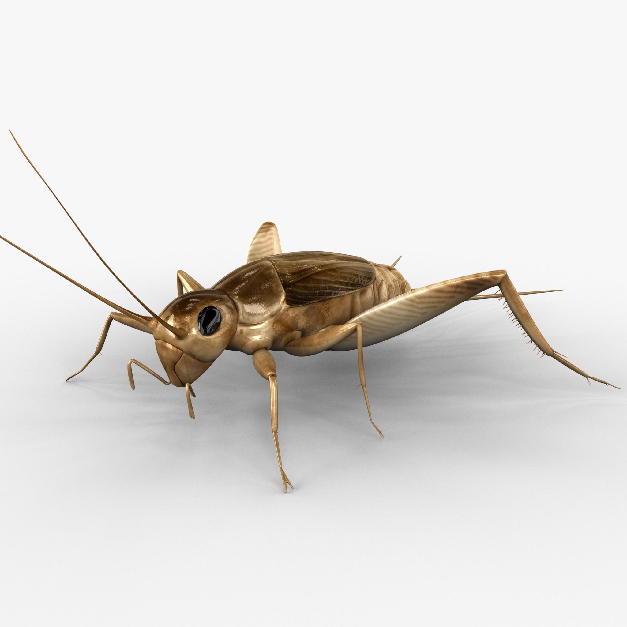 cricket 3d 3ds