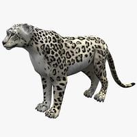 snow leopard rigged max