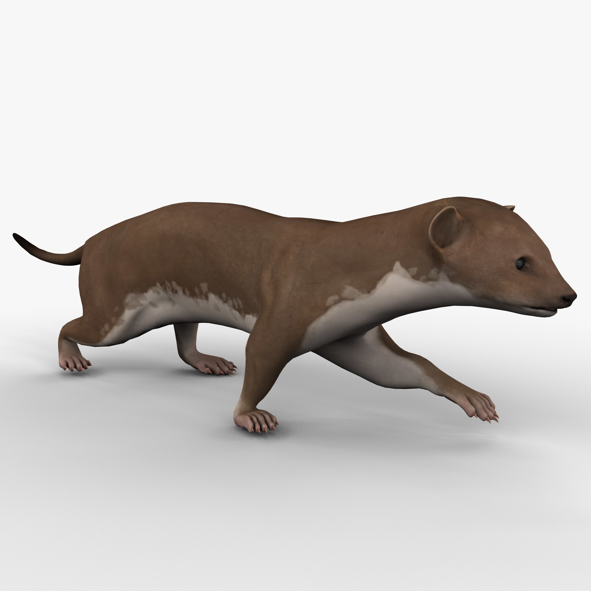 3d model weasel rigged