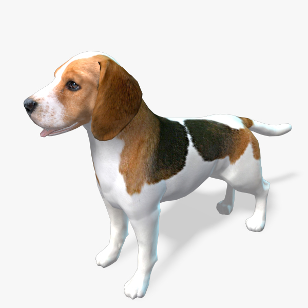 model of s dog beagle real-time