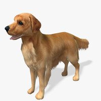 Real-Time Dog Golden Retriever 3D Model