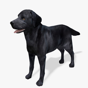 model s dog labrador black