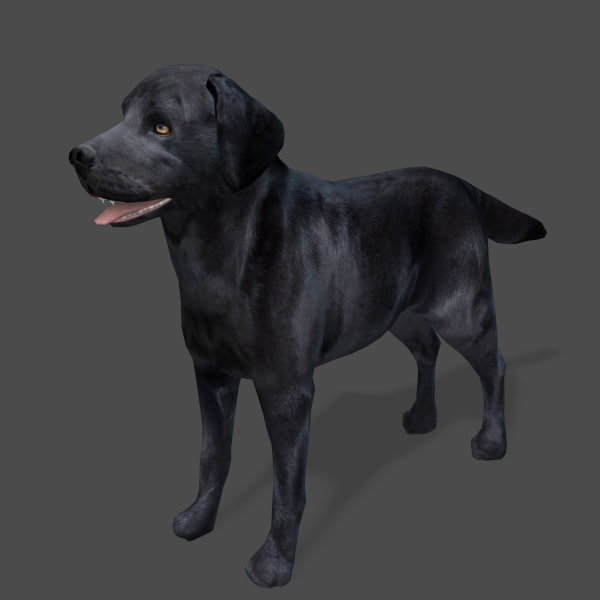model s dog labrador black