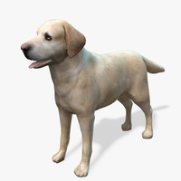 model s dog labrador yellow