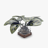 3d model vase leaves