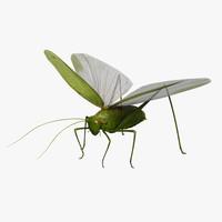 locust max